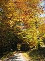Rothaarsteig Herbst 2008.jpg