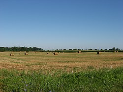 A field in Saltcreek Township
