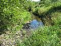 Ryjak Rzeka.jpg