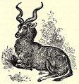 SFR b+w - antelope.jpg