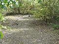Sains-en-Gohelle - Fosse n° 10 - 10 bis des mines de Béthune, puits n° 10 bis (E).JPG