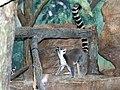Saint Louis Zoo 014.jpg
