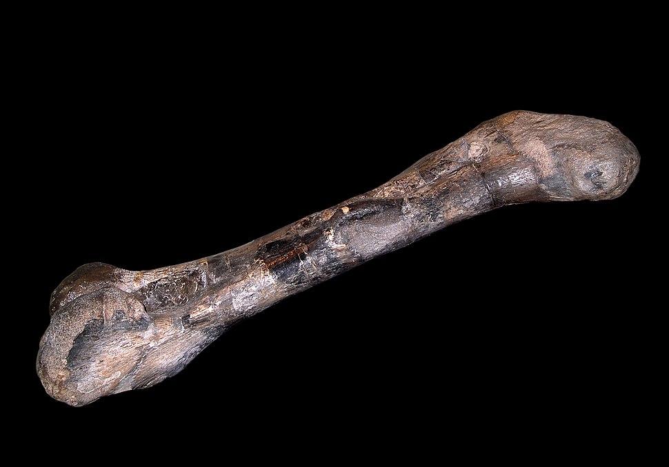 Sauropoda (8030762510)