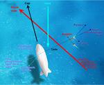 Schéma de principe de l'Aérosail de Stéphane Rousson lors de la remontée au vent, Aérosail, schéma de principe pour la remontée au vent; réalisation Stéphane Rousson, Bernard de Go Mars et Starcheuch.png