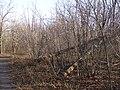 Schepkinsky Forest. Road cross and fallen power pylon.jpg