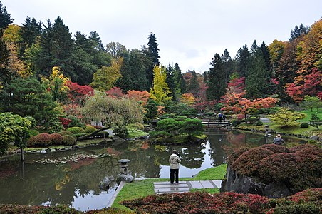 Seattle Japanese Garden 2011 16