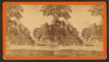 Section of Bull Street, Savannah, Ga, from Robert N. Dennis collection of stereoscopic views.png