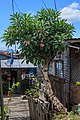 Semporna Sabah Bajau-Water-Village-01.jpg