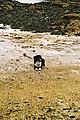 Sennen Cove 11 March 2005 Cornwall t (278559367).jpg