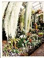 September Tropic Botanischer Garten Berlin - Botany Photography 1989 - panoramio.jpg