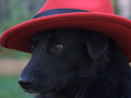Shadowdog Closeup.png