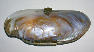 Shell purse - Shell purse made from a freshwater pearl mussel, Margaritifera shell
