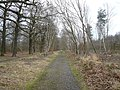 Sherwood Forest - Robin Hood Way - geograph.org.uk - 722478.jpg
