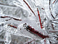 Shrub Branch-Ice Storm-Dec 2007-St Jo MO.jpg
