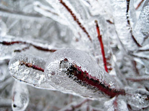 Ice formation on Shrub
