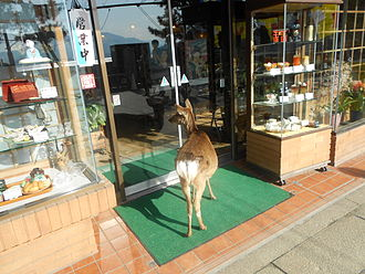 Sika deer - Outside of a store on the island of Miyajima