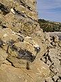 Slipped stone, Southwell Landslip - geograph.org.uk - 1030802.jpg