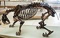 Smilodon californicus, Munich, 2017-09-11.jpg
