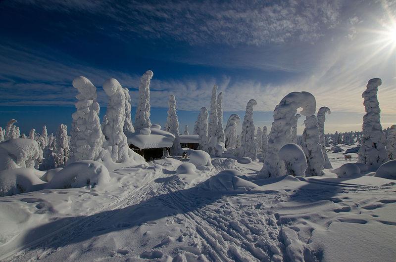 File:Snowy winter landscape - Riisitunturi National Park - Posio, Finland - 14 March 2016.jpg
