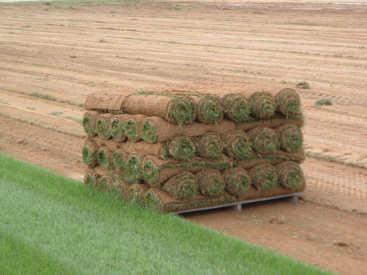 Image result for laying sod