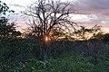 Solnedgång Etosha-5918 - Flickr - Ragnhild & Neil Crawford.jpg
