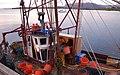 Sorting the catch, Bunessan Pier, Loch na Lathaich - geograph.org.uk - 811194.jpg