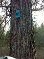 Spokane, WA, USA - panoramio (20).jpg