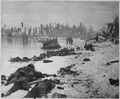 Sprawled bodies on beach of Tarawa, testifying to ferocity of the struggle for this stretch of sand. - NARA - 520625.tif