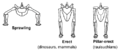 Sprawling and erect hip joints - horiz.png