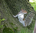 Squirrel (8).jpg
