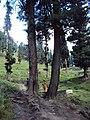 Srinagar - Pahalgam views 63.JPG