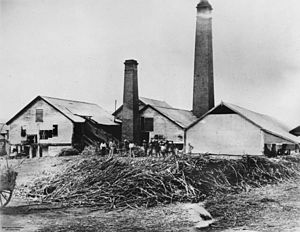 History of Queensland - Pioneer Sugar Mill at Mackay in the 1880s.