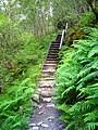 Steps on the West Highland Way - geograph.org.uk - 508196.jpg