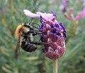 Stoic - Bee (by).jpg