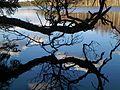 Strong Reflection on Vähä Kausjärvi - panoramio.jpg