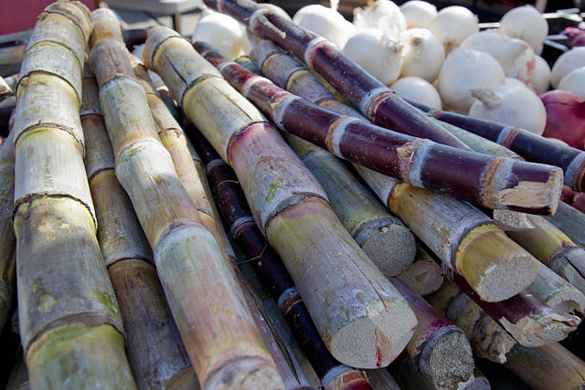 How, Eat, Sugarcane, raw, prepare, 吃, 甘蔗