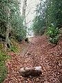 Sunken lane at Bramshott - geograph.org.uk - 1115509.jpg