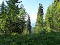 Sur le sentier du chard du beurre - panoramio (3).jpg