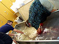 Swishing giant squid in tank.jpg