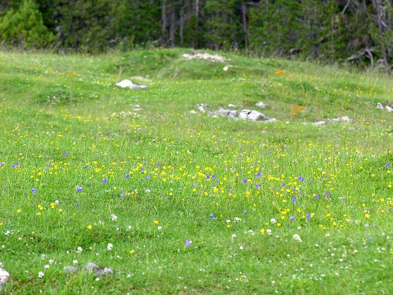 File:Swiss National Park 046.JPG