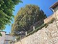 Tasso-del-Conte-Pucci-(Assisi).jpg