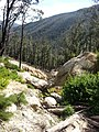 Telegraph Saddle to Sealers Cove Track, Wilsons Promontory National Park 02.jpg