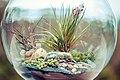 Terrarium bowl.jpg
