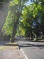 The Avenue, Bushey - geograph.org.uk - 1449345.jpg