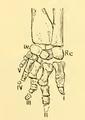 The Osteology of the Reptiles-193 uhyg hg kjh jhb jhgb hgv jhgv hgv uhyg hg jhg hgf uhgb trr.png