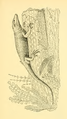 The Osteology of the Reptiles-249 vghj ert ert5y dert er.png