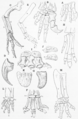 The Osteology of the Reptiles p175.png