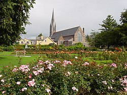 Roses in Tralee's town park