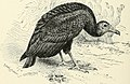 The birds of Illinois and Wisconsin (1909) (14752493161).jpg