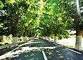 """The road to bejaia """" el Kseur"""".jpg"""